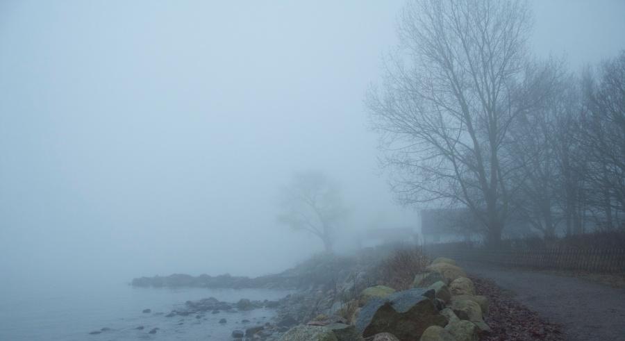 the fog1